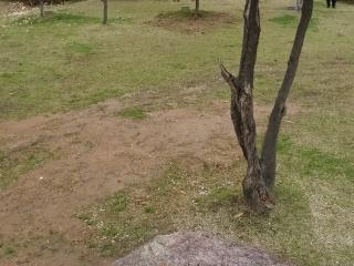 토양문제(호수공원).jpg